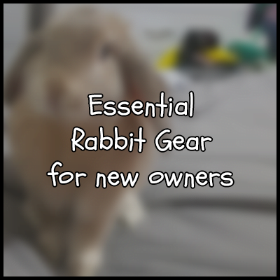 New Rabbit Owner supplies
