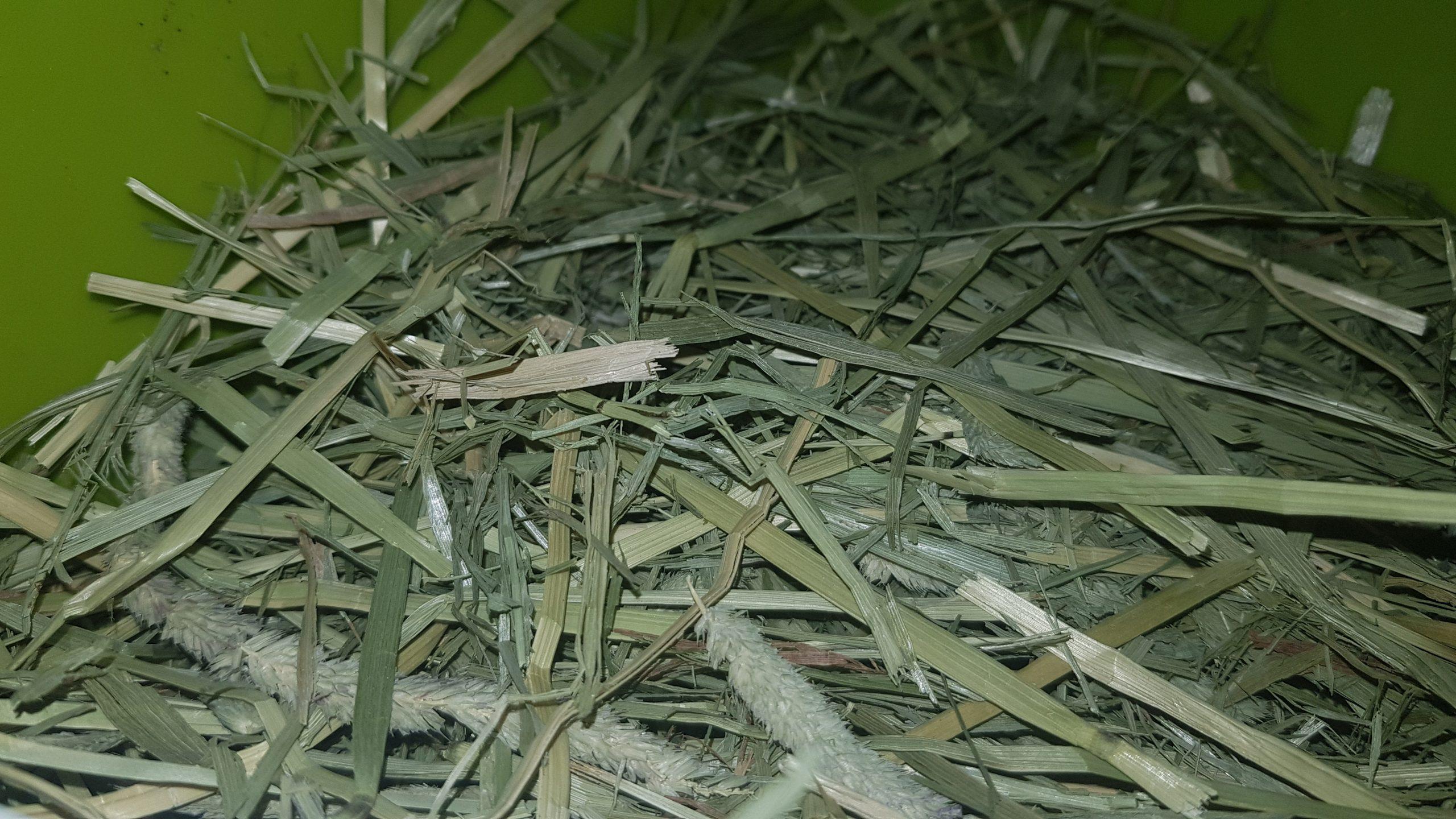 How to store Rabbit Hay