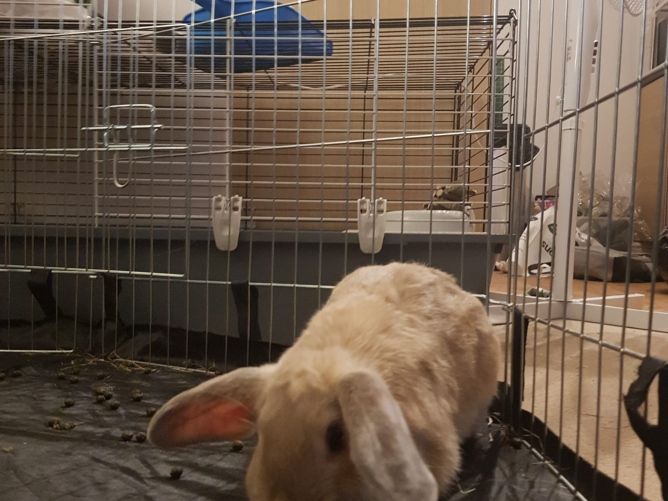 Wire Run for rabbits