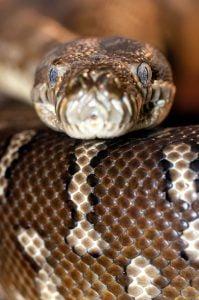 Snake - Rabbit Predator