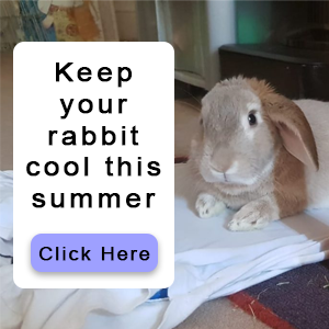 How to keep your rabbit cool this summer